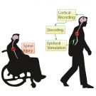 DARPA grant to improve spinal cord injury